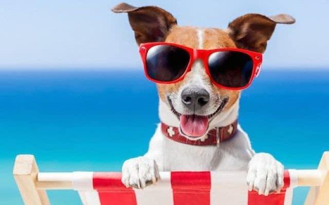 Come Proteggere i Cani dal Caldo Estivo
