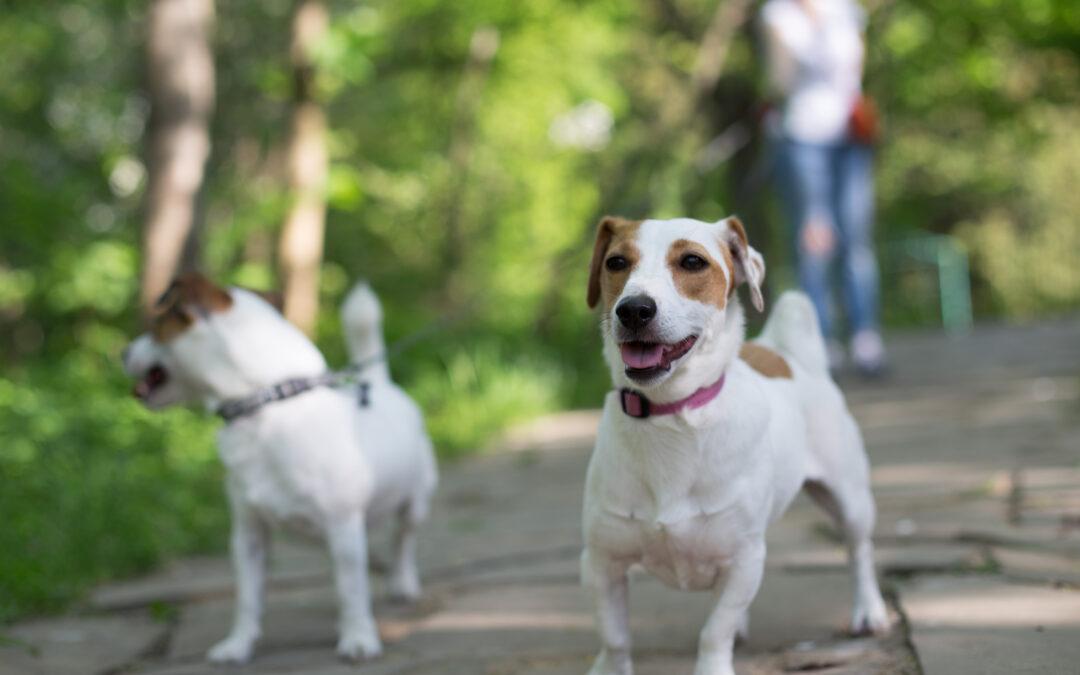 Asfalto bollente ed ustioni delle zampe nei cani: come curarle (e prevenirle)