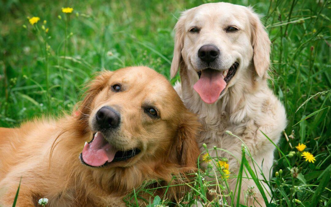 L'Antiparassitario per il Cane: come sceglierlo e perché è importante