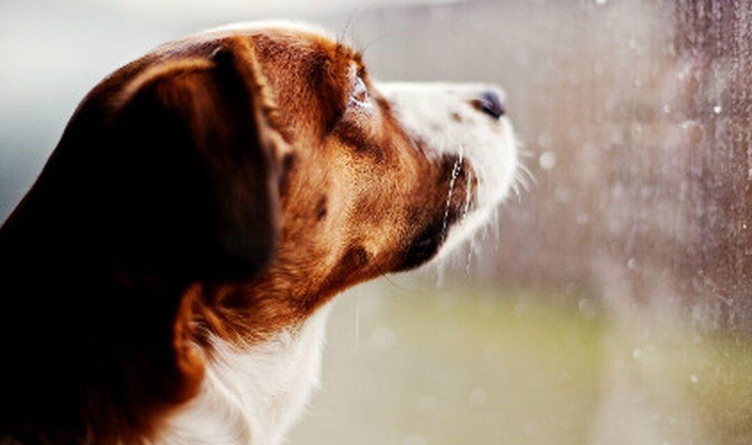 Consigli per cani in autunno e in inverno
